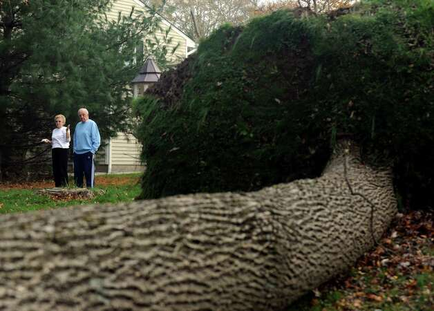 Jennie and Pat Loglisci look at the large tree that fell in their backyard on Prudence Drive in Stamford, Conn. The residents of Prudence Drive continued to deal with the mess caused when a tree and downed utility pole, complete with leaking transformer and huge wires looping everywhere, blocked them from leaving their homes as of late afternoon on Thursday, Nov. 1. 2012. Tree removal and repair crews were on the scene early Thursday evening. Photo: Cathy Zuraw / Stamford Advocate