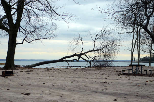 A fallen tree at Cove Island Beach in Stamford on Thursday, Nov. 1, 2012. Photo: Amy Mortensen / Stamford Advocate Freelance