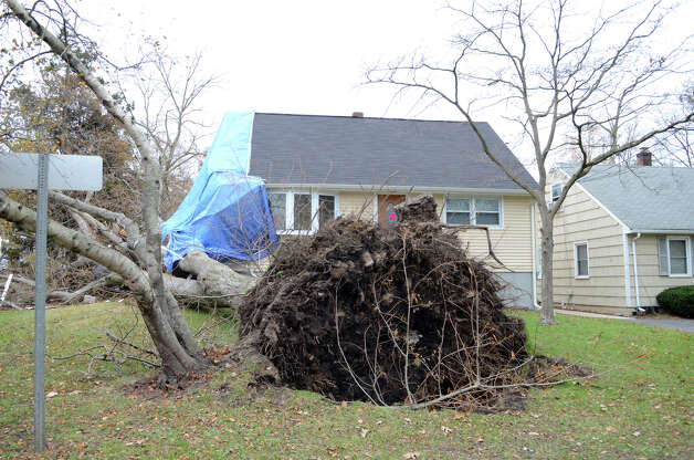 A large tree is uprooted in the front yard of a home at the intersection of Iroquois Rd. and Ponus Ave. in Stamford on Thursday, Nov. 1, 2012. Photo: Amy Mortensen / Stamford Advocate Freelance