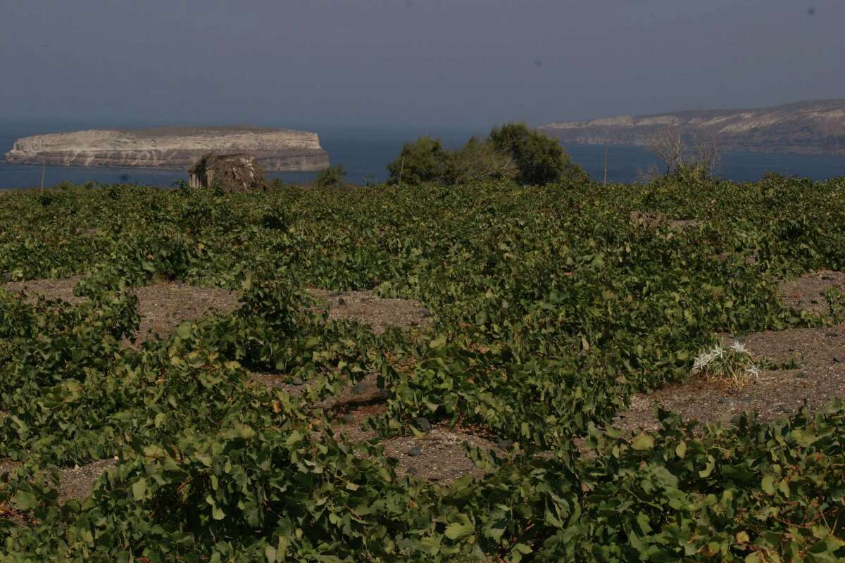 Boutari Vineyards vines on the Greek island of Santorini are grown in a nest.