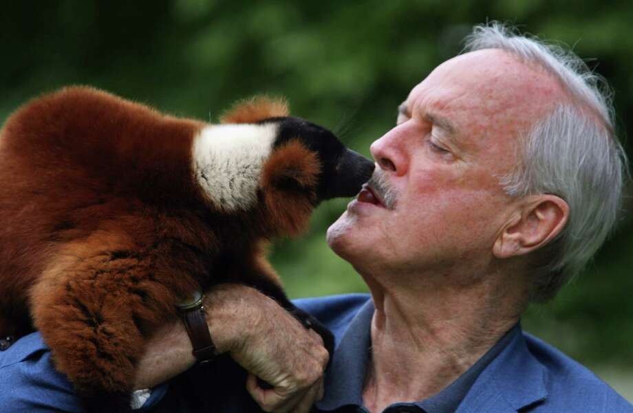 More Cleese, more critters. Actor John Cleese feeds grapes to his friend and co-star Colin, a red ruffed lemur at Bristol Zoo on July 22 2008, in Bristol, England. John Cleese has a passion for lemurs and their conservation, he says started from school boy visits to Bristol Zoo and he has even had a species of wooly lemur's named after him. Photo: Matt Cardy, Getty / 2008 Getty Images