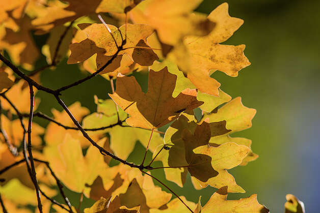 Colorful bigtooth maple trees lure visitors to Lost Maples State Natural Area, but the park also has birds and butterflies. Photo: Kathy Adams Clark / KAC Productions