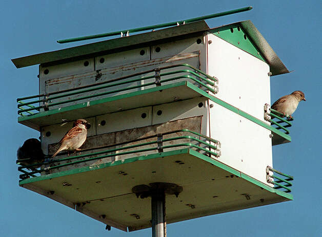Close up purple martin houses until the birds return in February. Photo: Express-News File Photo / SAN ANTONIO EXPRESS-NEWS