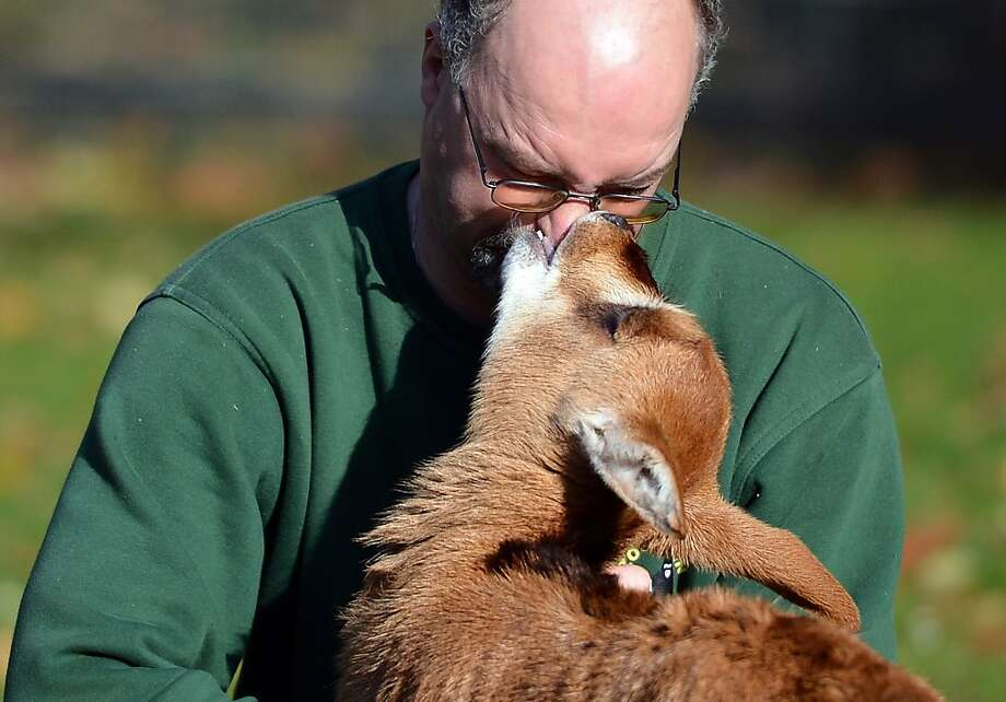 Her favorite Martin: A sable antelope fawn kisses keeper Martin Damboldt on the nose at the zoo in Berlin. Damboldt has been caring for the calf because her mother wouldn't feed her. Photo: Britta Pedersen, AFP/Getty Images