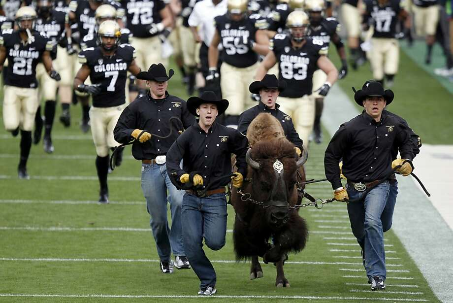 Handlers run Ralphie, the mascot for Colorado, onto the field in front of the team as Colorado hosts Stanford in an NCAA college football game in Boulder, Colo., Saturday, Nov. 3, 2012. (AP Photo/David Zalubowski) Photo: David Zalubowski, Associated Press