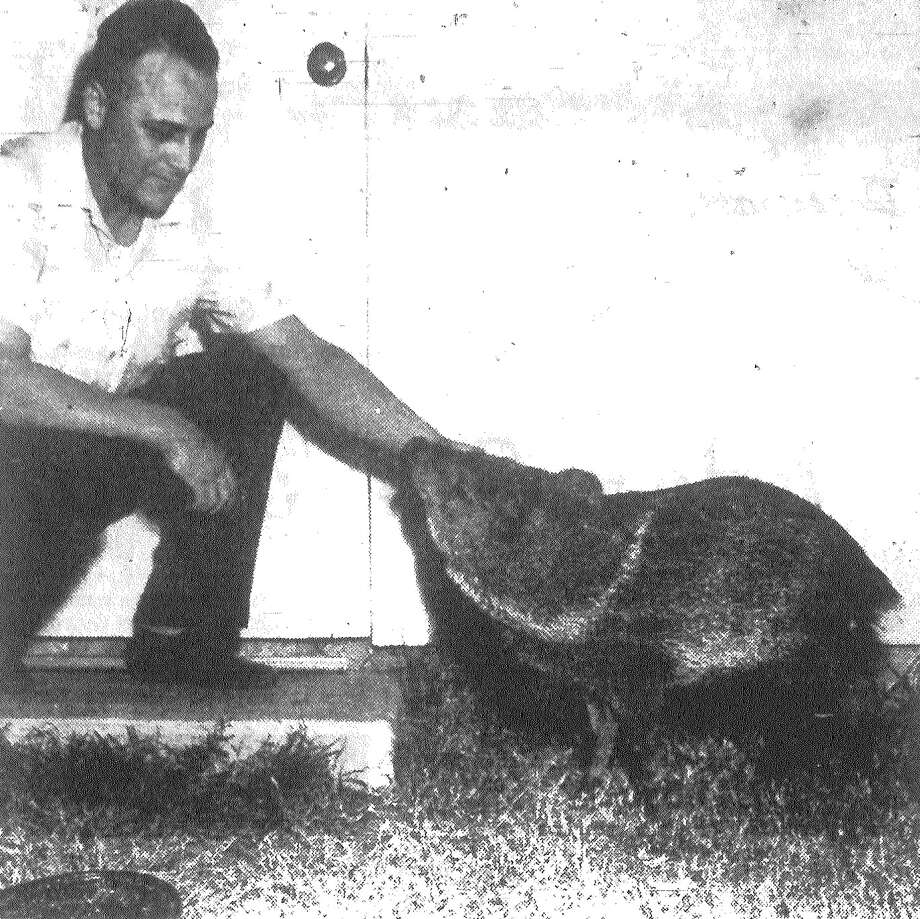 James Stehle, a Kelly AFB staff sergeant, pets a javelina that turned up in his neighborhood early Monday. Stehle first thought the animal was a wild critter but it later started nuzzling his leg like a cat. Published in the San Antonio News Nov. 12, 1962. Photo: File Photo
