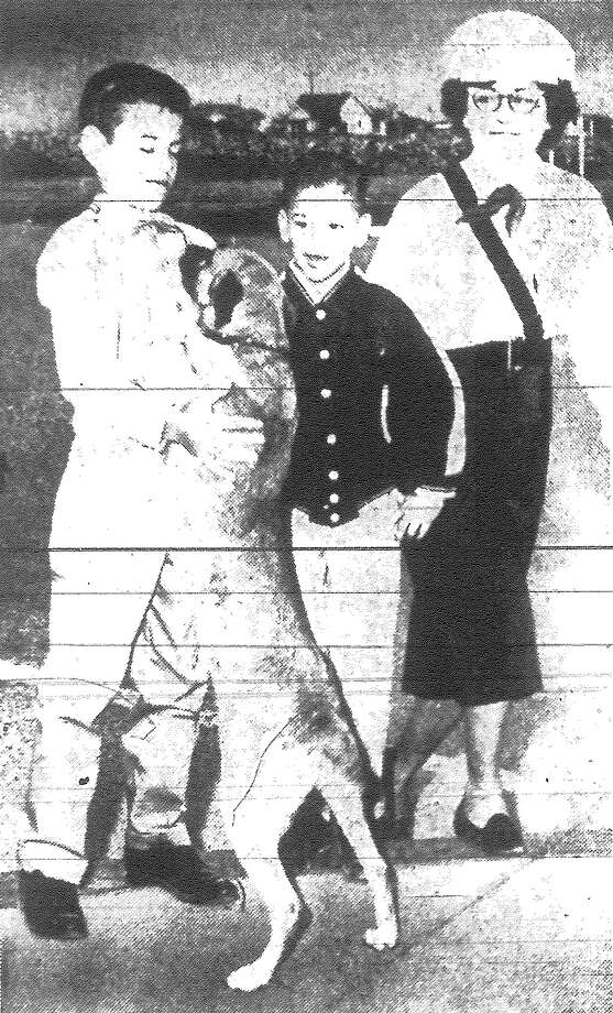 As Mrs. John T. Maxwell of the Mama Patrol, right, reaches the opposite side of the street at W. Thompson and Cupples, with the children, Brownie the dog, who might be called an auxiliary member of the patrol, plants a goodbye paw on the chest of one of the boys. Published in the San Antonio Light Nov. 14, 1962. Photo: File Photo