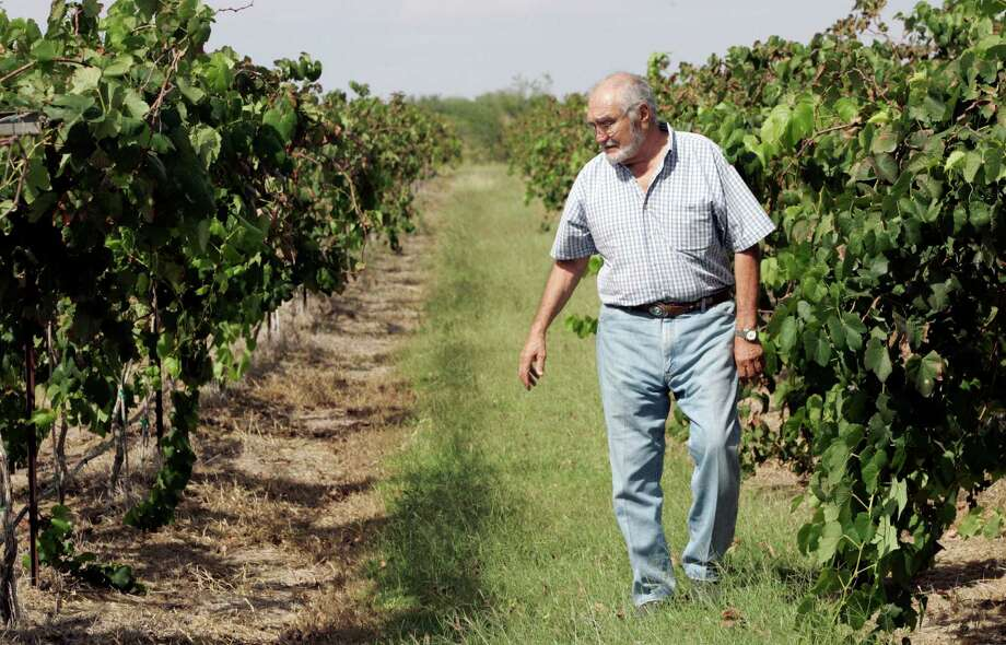 Jorge Jaber, here checking his vines north of Mission, expects this year's harvest to yield about 14,000 bottles of red and white wine. Photo: Delcia Lopez, SPECIAL TO THE EXPRESS NEWS / DELCIA LOPEZ PHOTOGRAPHY©