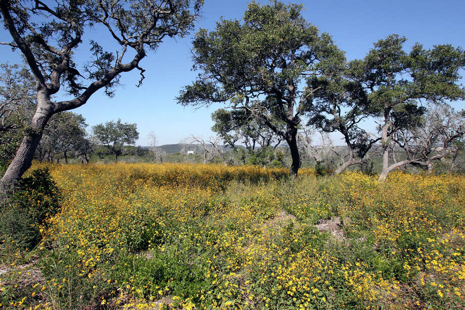 Wildflowers and trees decorate a high ridge on possible land additions to the Government Canyon State Natural Area  on October 30, 2012. Photo: Tom Reel, San Antonio Express-News / ©2012 San Antono Express-News