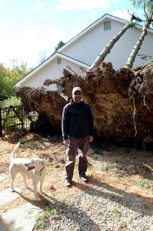 Homeowner Ashley Barretto stands next to the shallow roots of pine trees that were uprooted and fell on a neighboring property owned by Steve Gatto on Westminster Rd. in Stamford on Saturday, Nov. 3, 2012. Five pine trees from Barretto's property fell on Gatto's home during Hurricane Sandy. Photo: Amy Mortensen / Connecticut Post Freelance