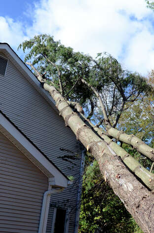 Pine trees rest on the roof of Steve Gatto's home on Westminster Rd. in Stamford on Saturday, Nov. 3, 2012. Five pine trees from a neighboring property fell on Gatto's home during Hurricane Sandy. Photo: Amy Mortensen / Connecticut Post Freelance