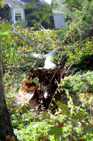 A large limb from a copper beech tree is pictured in the front yard of a home located at 153 Stamford Ave. in Stamford on Saturday, Nov. 3, 2012. Photo: Amy Mortensen / Connecticut Post Freelance