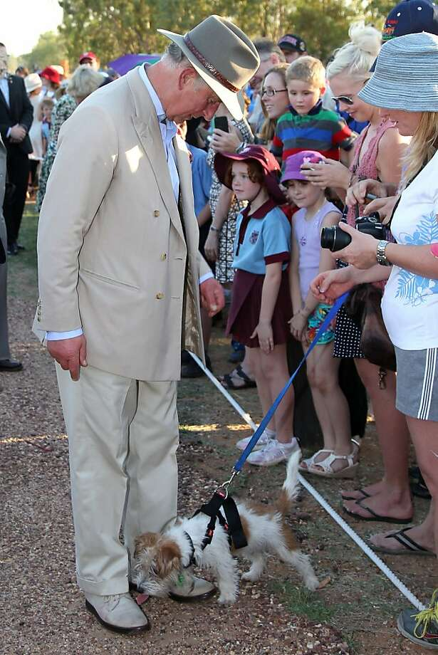 Care for a shine, Your Highness? In Longreach, Australia, a furry commoner licks the shoes of the Prince of Wales. Prince Charles and Camilla are in Australia on the second leg of a Diamond Jubilee Tour. Photo: Pool, Getty Images