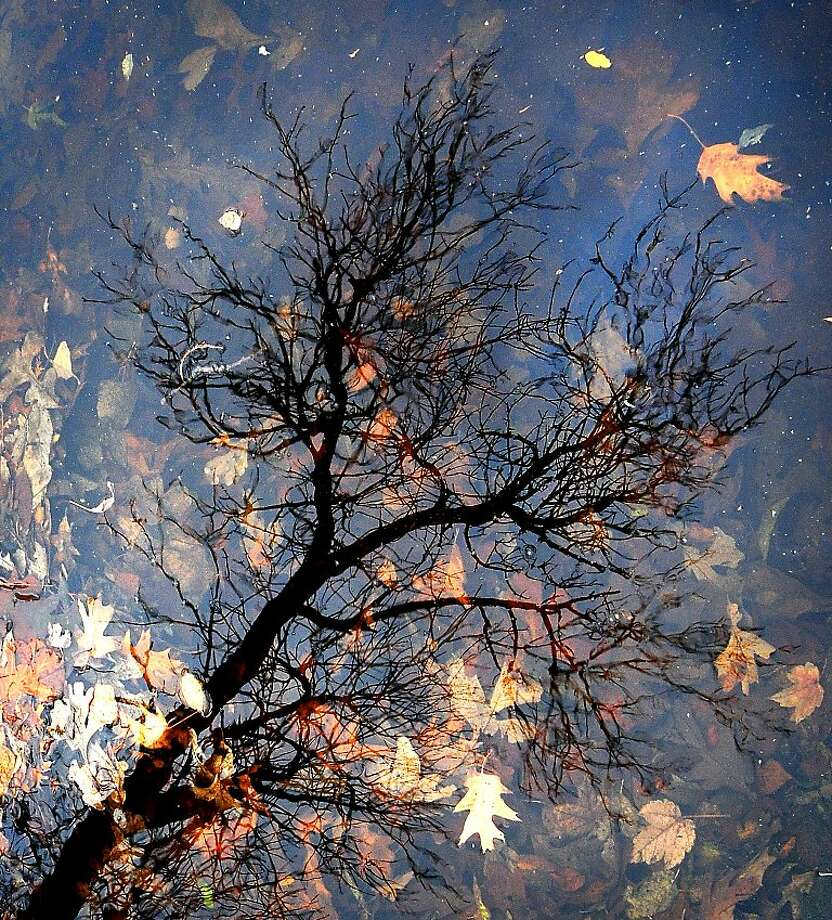 November in the Midwest:Autumn leaves sink to the bottom of a pond in Salina, Kan.'s Sunset Park. Photo: Tom Dorsey, Associated Press