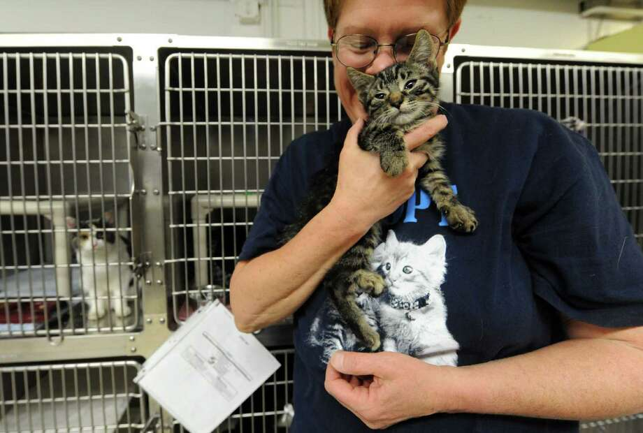 A volunteer holds a kitten up for adoption at the Mohawk Hudson Humane Society in Menands, NY Wednesday Oct. 10, 2012.  (Michael P. Farrell/Times Union) Photo: Michael P. Farrell