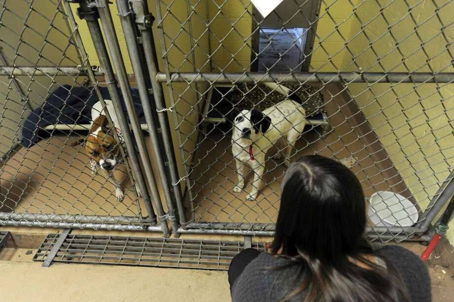 Brad Shear, president of the Mohawk Hudson Humane Society, said t85 percent of the animals brought to his organization are adopted out. (Michael P. Farrell/Times Union) Photo: Michael P. Farrell