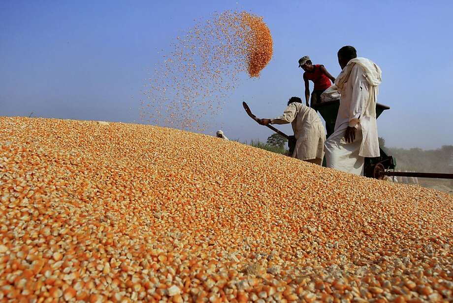 Farmers shovel harvested corn into a huge pile outside Lahore, Pakistan. Photo: K.M. Chaudary, Associated Press