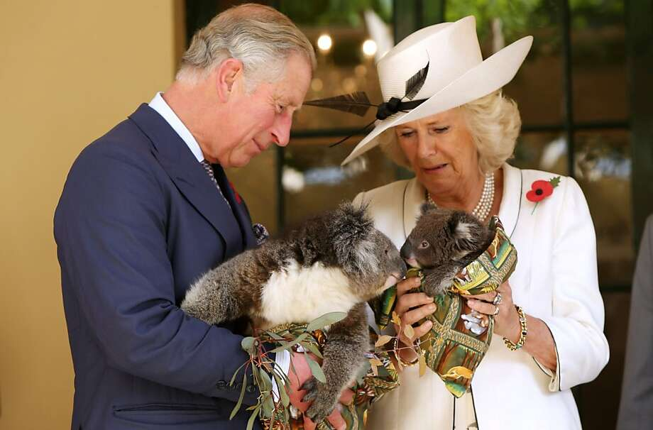 Yesterday it was a kangaroo, today - koalas:Charles and Camilla can't go anywhere in Australia without someone shoving a marsupial at them. (Government House in Adelaide.) Photo: Morne De Klerk, Getty Images