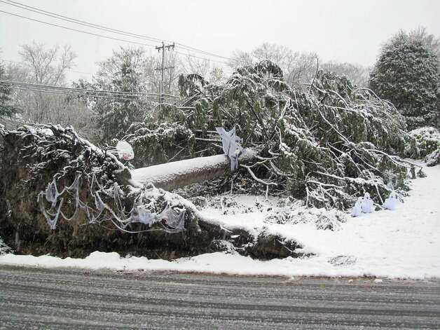 Snow from the nor'easter falls on a tree downed by Hurricane Sandy on Elm Street in New Canaan, Conn. Nov. 7, 2012. Photo: Tyler Woods