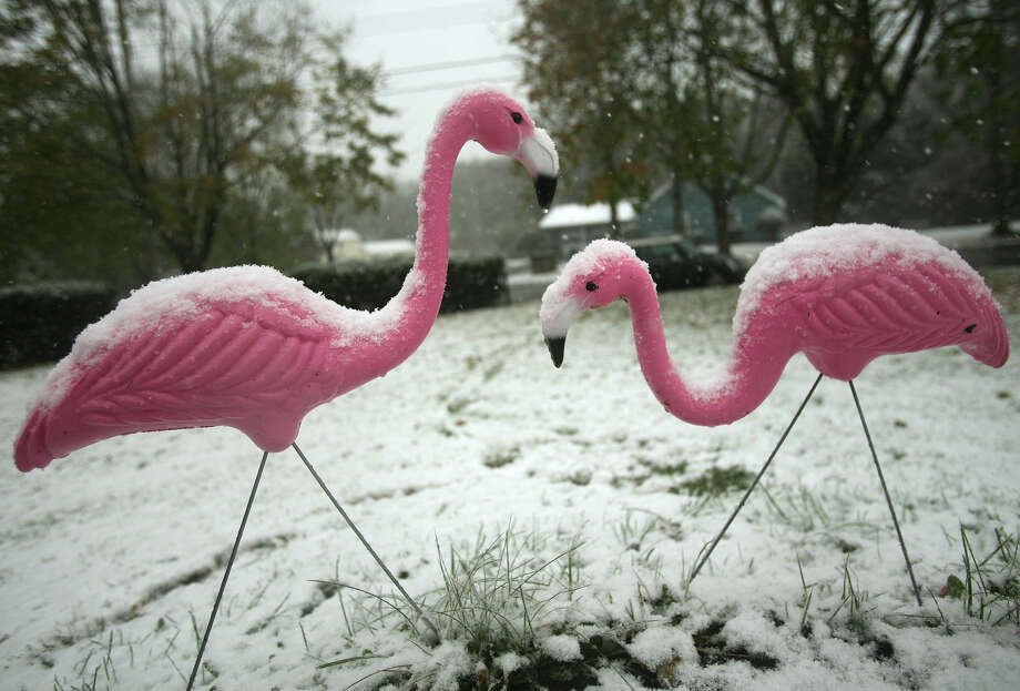 A pair of pink lawn flamingoes catch the new fallen snow in front of a home on Todd Drive in Milford on Wednesday, November 7, 2012. Photo: Brian A. Pounds / Connecticut Post