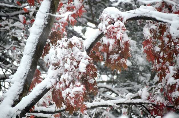 The first snow covers autumn in New Canaan.  Nov. 7, 2012, New Canaan, Conn. Photo: Jeanna Petersen Shepard
