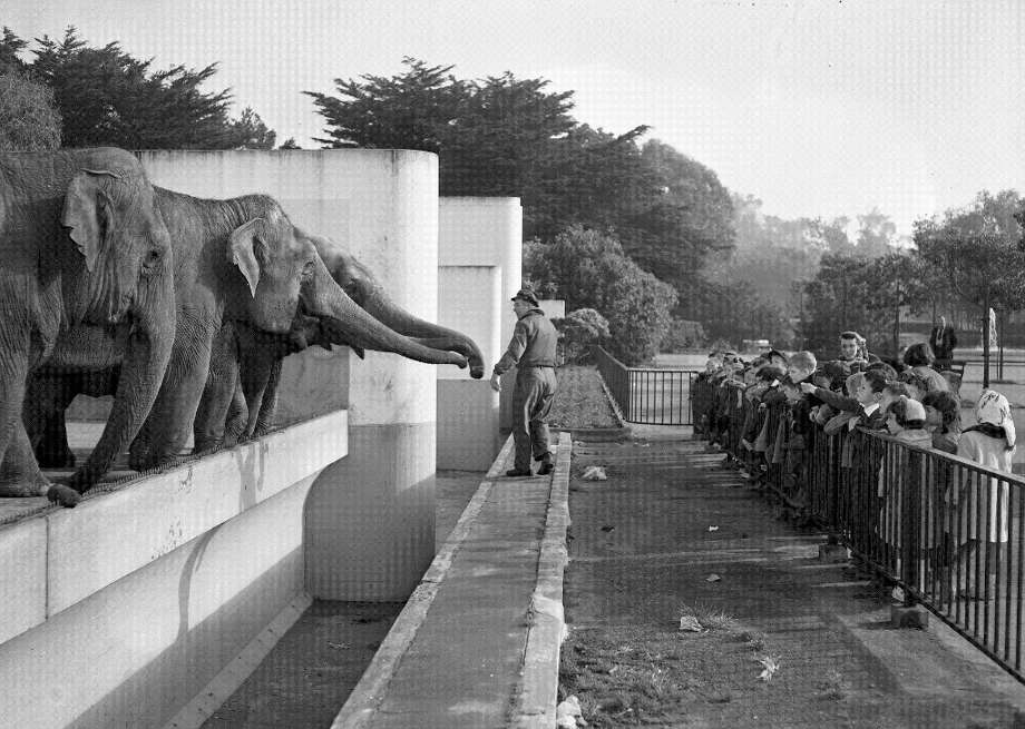 Jan. 22, 1953: Students from MacGregor Elementary in Albany feed the elephants. The Pachyderm House, Lion House, cat and bear grottos and Monkey Island were all Works Progress Administration jobs. (Chronicle file) Photo: Chronicle File, The Chronicle / ONLINE_YES