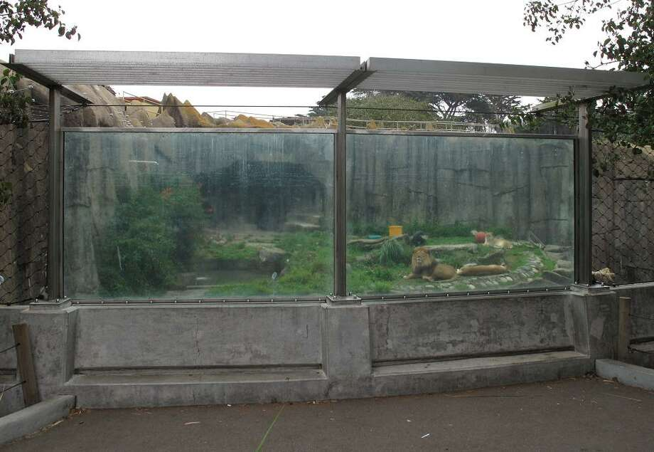 After Tatiana the tiger escaped from her enclosure and killed a zoo patron, the security around the lion and tiger enclosures changed measurably. This is the kind of wall I would expect when visiting a T-Rex.  (Peter Hartlaub / The Chronicle)