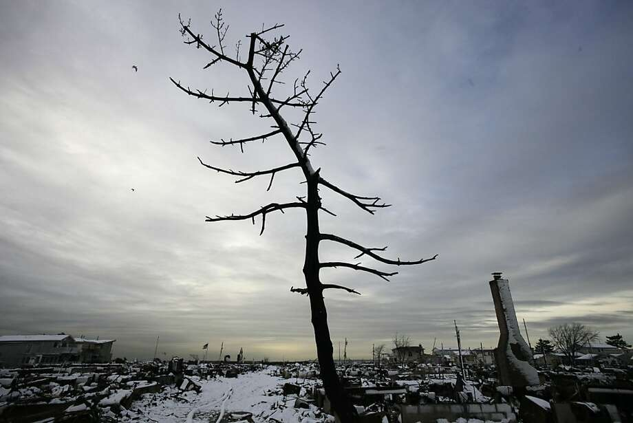 A  fire-scorched tree stands in the landscape of Breezy Point after a Nor'easter snow, Thursday, Nov. 8, 2012 in New York.  The beachfront neighborhood was devastated during Superstorm Sandy when a fire pushed by the raging winds destroyed many homes. Photo: Mark Lennihan, Associated Press
