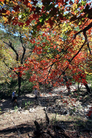 Hikers walk under a colorful area at Lost Maples STate Natural Area on November 7, 2012. Photo: Tom Reel, San Antonio Express-News / ©2012 San Antono Express-News