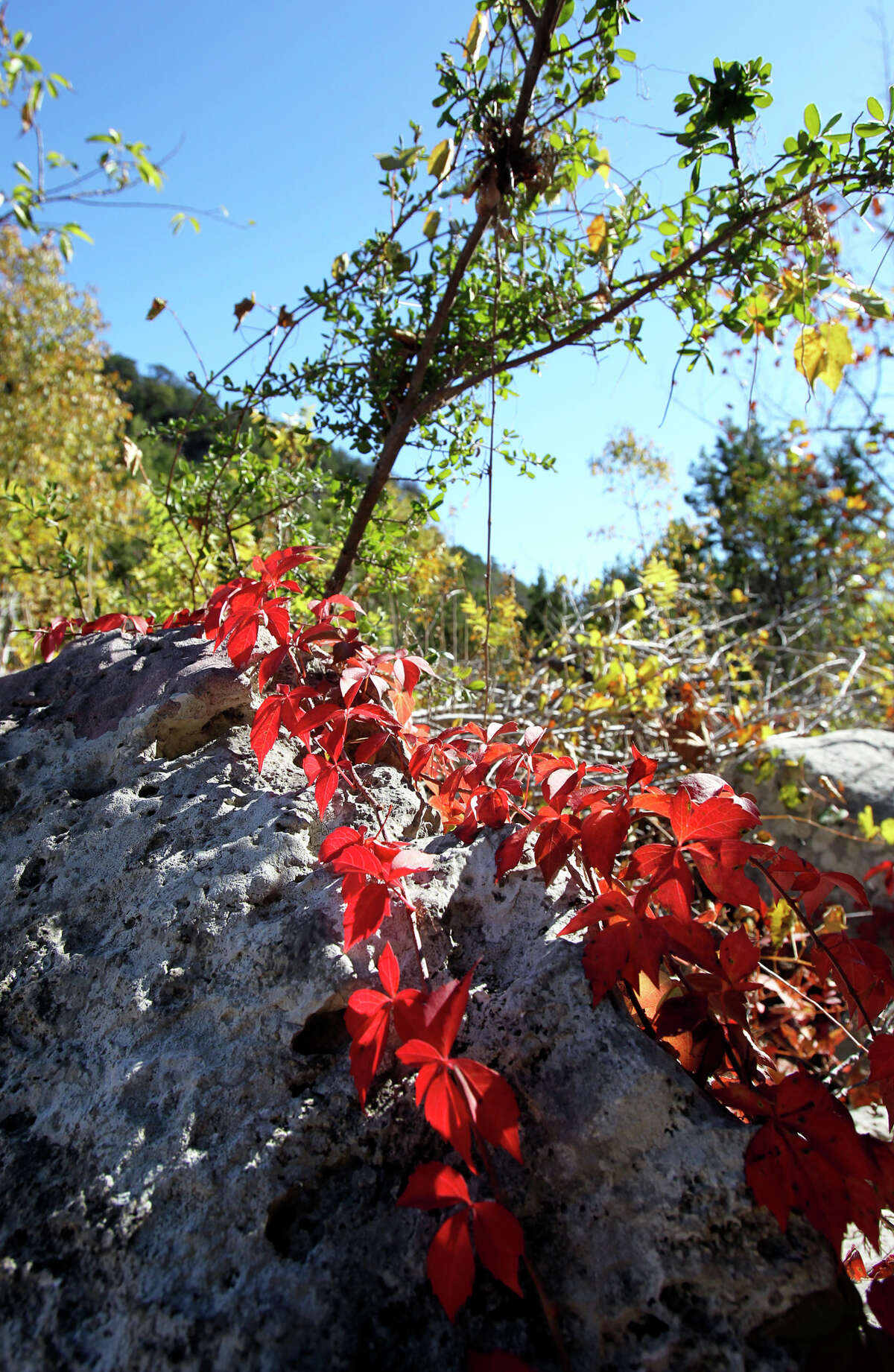 Lost Maples STate Natural Area on November 7, 2012.