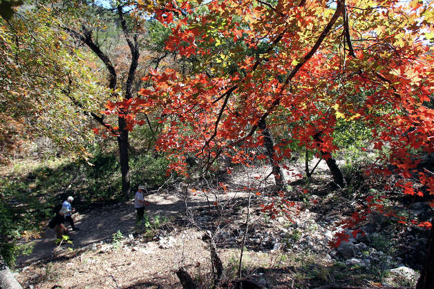 Hikers walk through a colorful area at Lost Maples STate Natural Area on November 7, 2012. Photo: Tom Reel, San Antonio Express-News / ©2012 San Antono Express-News