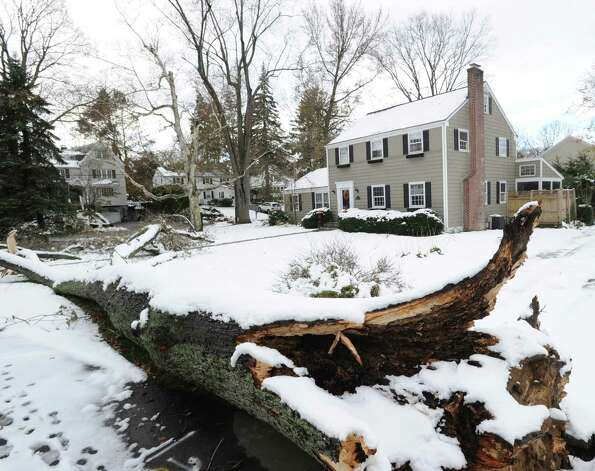 A snow-covered fallen tree in front of a Lockwood Avenue home in Old Greenwich, Thursday afternoon, November 8, 2012, are a reminder of a week of wild weather during which Greenwich was hit with the one-two punch of a hurricane and nor'easter. Photo: Bob Luckey / Greenwich Time