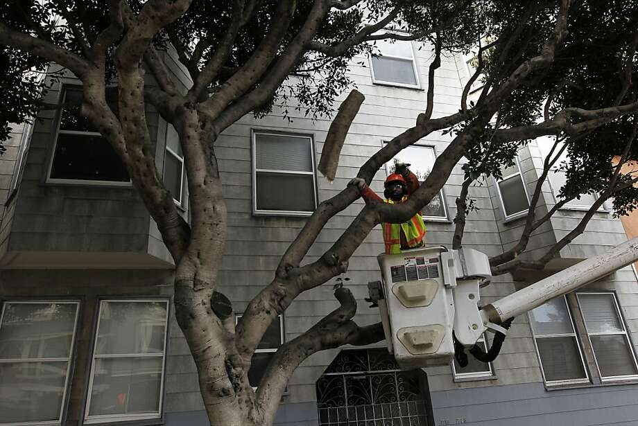 A Public Works employee trims trees along Hyde Street. Photo: Michael Macor, The Chronicle