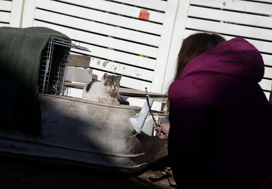 Aha! I see through your diabolical plan to lure me into a cage with your irresistible rag on a stick! Dina McKenzie tries to trap a feral cat in the New Dorp section of Staten Island, but the puss is not taking the bait. McKenzie was working with animal rescuers trying to help displaced homeowners find their pets as well as catch strays that need care. Photo: Seth Wenig, Associated Press