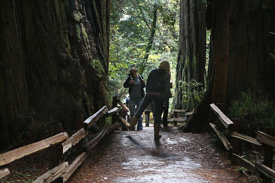 Visitors walk one of the trails through Muir Woods National Monument in West Marin, Calif. Photo: Liz Hafalia, The Chronicle