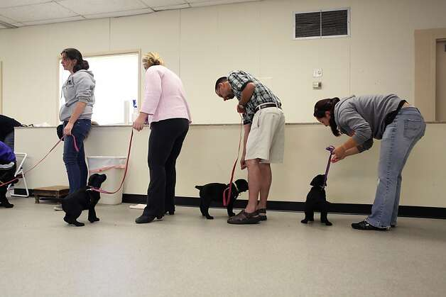 "Students engage in their class work at Rohnert Park's Bergin University for Canine Studies, where ""sitting for a test"" can have different meanings. Photo: Liz Hafalia, The Chronicle"