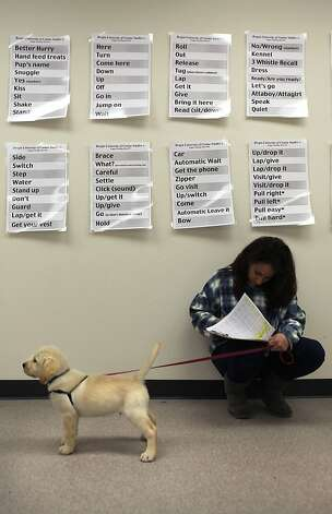 Student Jodie Miller fills out a training log for her assigned puppy. Photo: Liz Hafalia, The Chronicle