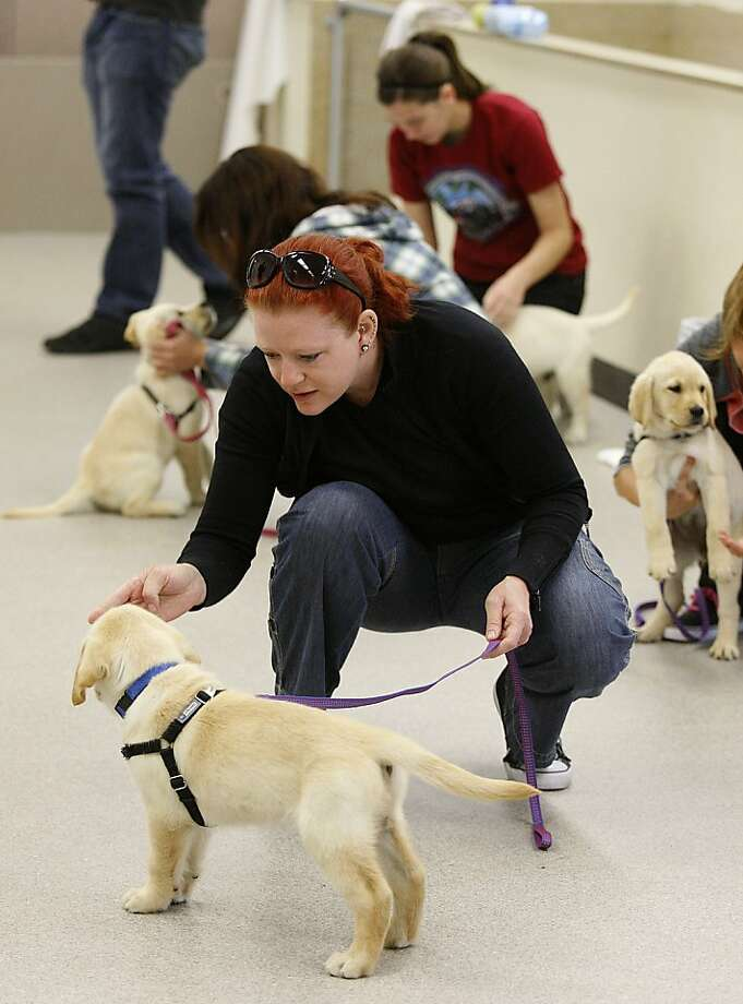 Student Chris Webb from Oakland training a puppy at Bergin University of Canine Studies in Rohnert Park, Calif., on Monday, September 17, 2012. Photo: Liz Hafalia, The Chronicle