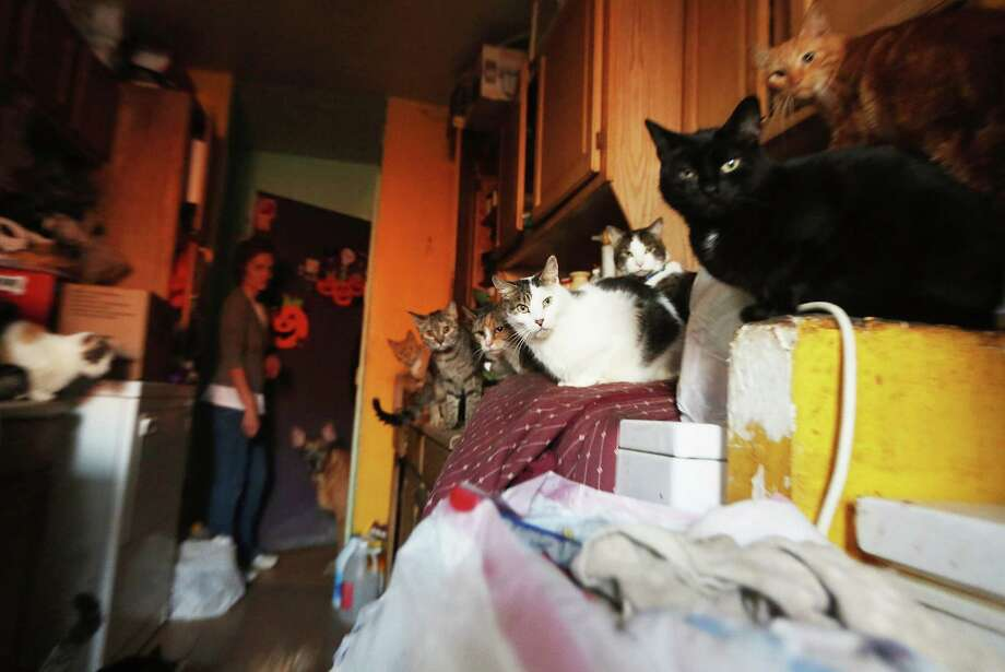 Community pet rescuer Kim Ruiz stands among the cats, five of whom were rescued during Superstorm Sandy, and dogs she currently houses in her unheated apartment without electricity in the Far Rockaway neighborhood in the Ocean Bay public housing projects in the Far Rockaway neighborhood on November 9, 2012 in the Queens borough of New York City. Hundreds of other Ocean Bay residents remain without heat or electricity eleven days after Superstorm Sandy struck. 53 New York City public housing buildings remain without power and 113 public housing buildings still don't have heat in the wake of the storm. Photo: Mario Tama, Getty Images / 2012 Getty Images