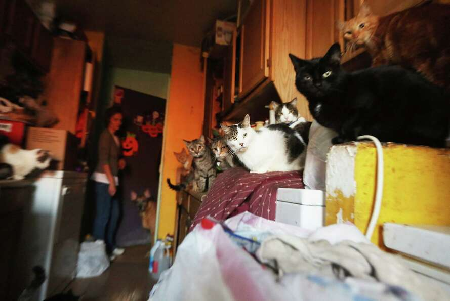 Community pet rescuer Kim Ruiz stands among the cats, five of whom were rescued during Superstorm Sa