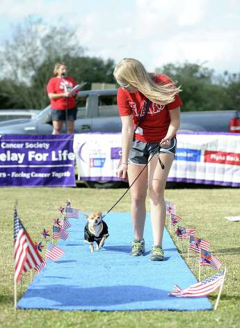 The American Cancer Society held their Bark for Life event at Tyrrell Park on Saturday, November 10, 2012.  This event brought out pups of all shapes and sizes.  Offering activities, contests, and a special walk for the dogs. One of many beautiful dogs up for adoption through the Sweet Pups organization. Photo taken: Randy Edwards/The Enterprise
