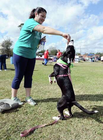 The American Cancer Society held their Bark for Life event at Tyrrell Park on Saturday, November 10, 2012.  This event brought out pups of all shapes and sizes.  Offering activities, contests, and a special walk for the dogs. Stacy Cotten and Milkshake of Beaumont show off a few tricks for the camera. Photo taken: Randy Edwards/The Enterprise
