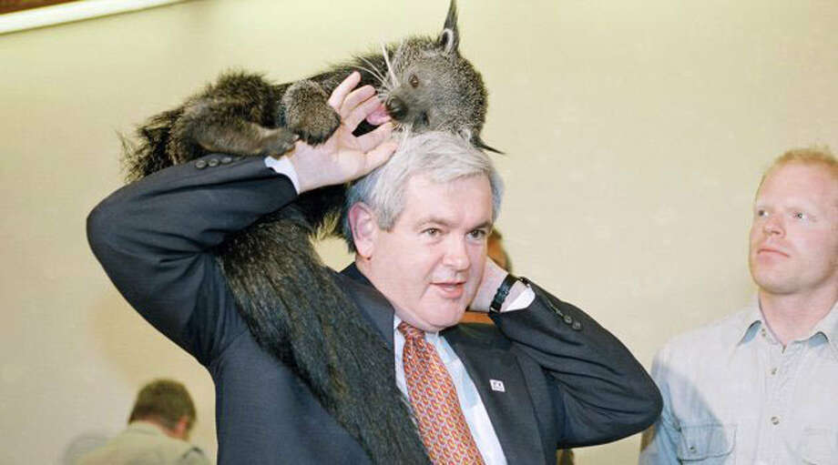 Newt Gingrich (Joe Marquette / AP Photo)