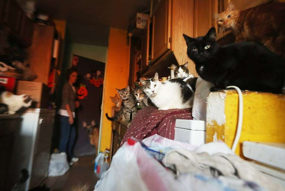 There's never enough counter space in Kim Ruiz's kitchen, especially not when her pooch is patrolling the floor of her home in the Far Rockaway neighborhood of Queens. In addition to her own cats, Ruiz rescued five felines during Superstorm Sandy. Her public housing apartment still doesn't have heat. Photo: Mario Tama, Getty Images