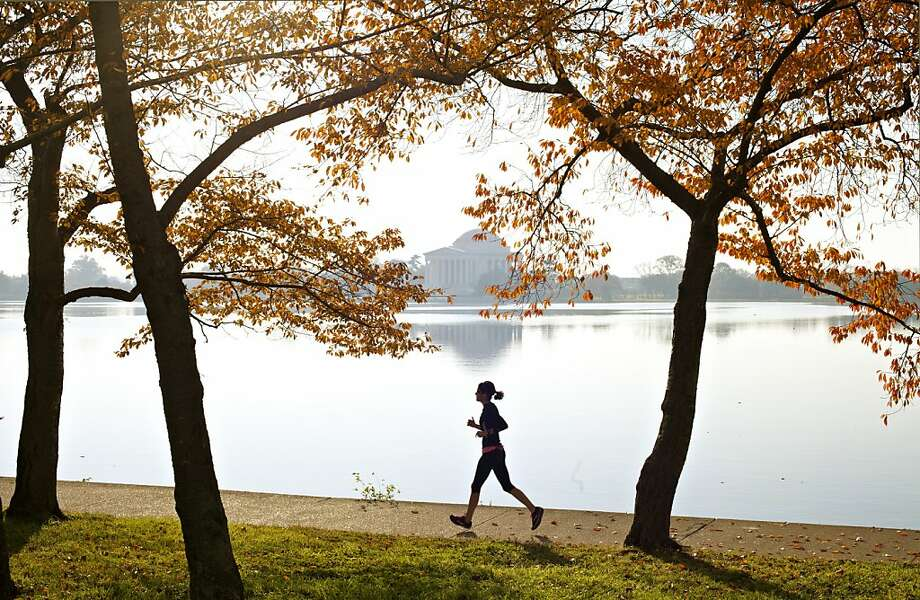 With the Jefferson Memorial in the distance, the last leaves of summer cling to the famous cherry trees that ring the Tidal Basin in Washington, Monday, Nov. 12, 2012, as spring-like temperatures hit the Washington area. Photo: J. Scott Applewhite, Associated Press
