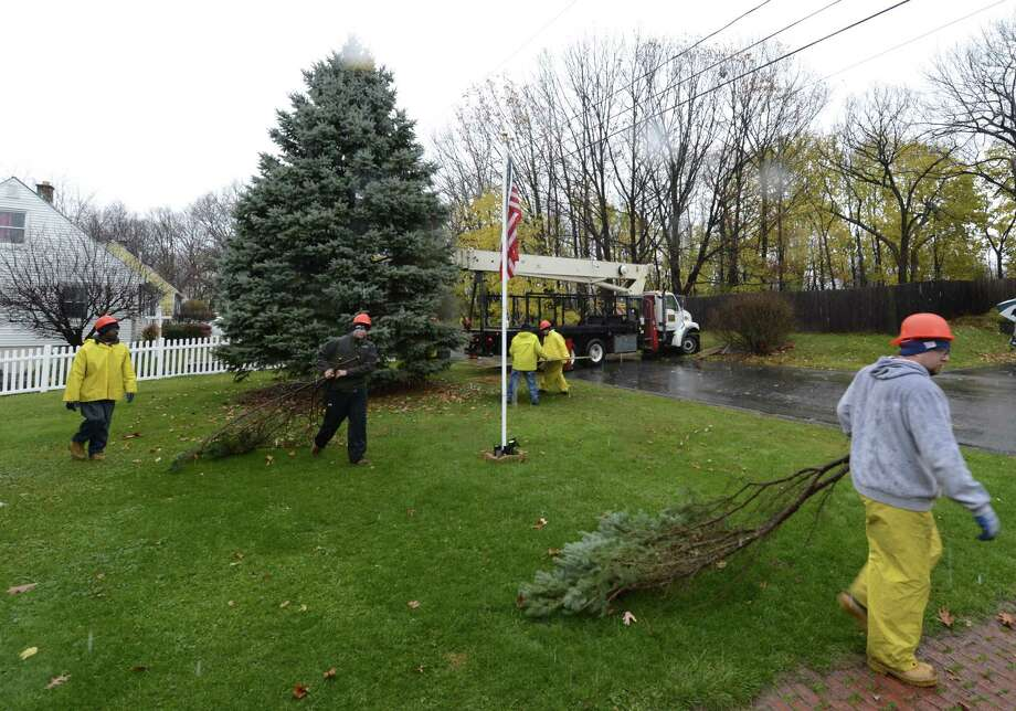 Workers from the NYS OGS prepare the tree on the front lawn of 52 Vista Avenue in Latham, N.Y. for its removal and ultimate replacement to the front lawn of the State Capitol as one of the two state Christmas trees Nov 12, 2012.  (Skip Dickstein/Times Union) Photo: SKIP DICKSTEIN