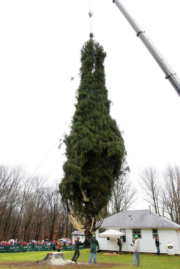 Crews use a crane to hoist a 80 ft. tall, 50 ft. diameter, 10-ton Norway Spruce tree from its base at the home of Joseph Balku in Flanders, N.J., Tuesday, Nov. 13, 2012. The tree will be laid onto a flatbed truck and transported to New York City where it will be this years Rockefeller Center Christmas Tree. (AP Photo/Rich Schultz) Photo: Rich Schultz, Associated Press / FR27227 AP