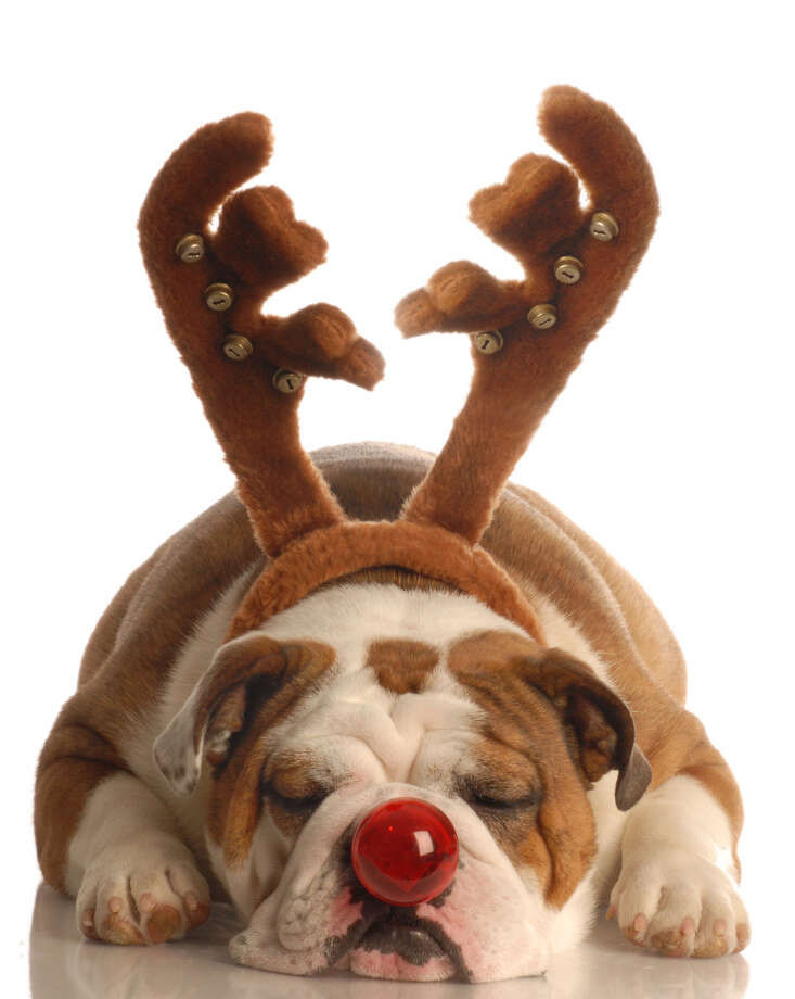 You mistake your dog for a reindeer.  Photo: Willee Cole, Fotolia.com / handout / stock agency