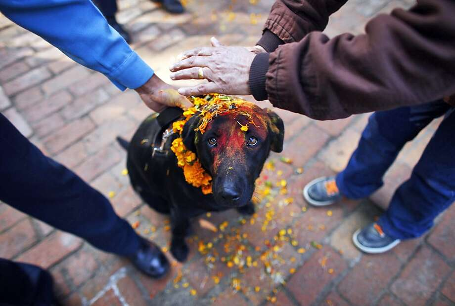 Nepalese policemen apply vermillion powder and perform rituals on a dog during the Tihar festival celebrations at a police kennel division in Katmandu, Nepal, Tuesday, Nov 13, 2012. Dogs are worshipped to acknowledge their role in providing security during Tihar festival, one of the most important Hindu festivals dedicated to the worship of the Goddess of wealth Laxmi. Photo: Niranjan Shrestha, Associated Press