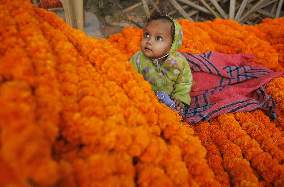 The daughter of the best exotic marigold vendorin Allahabad, India, plays among the blooms, squashing Dad's livelihood. Photo: Rajesh Kumar Singh, Associated Press